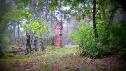 Leśny cmentarz ewangelicki w Młynach Piekarskich