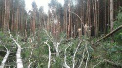 Nadleśnictwo Turek - Lasy Państwowe