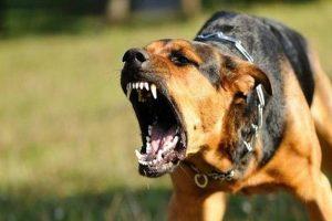 Uwaga na niebezpieczne psy na terenie gminy Brudzew