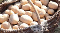 ŚDS Młodzianów. Święto pieczonego ziemniaka