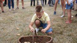 Tarnowski Młyn. Dzień pieczonego ziemniaka