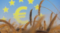 rolnictwo, zboże, euro