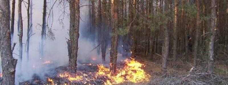 Uwaga na zagrożenie pożarowe lasów