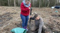 Na terenie leśnictwa Grzymiszew przybyło młodych drzew   Lidia Patrzykąt