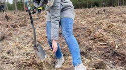 Na terenie leśnictwa Grzymiszew przybyło młodych drzew   Marta Kiszewska
