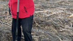 Na terenie leśnictwa Grzymiszew przybyło młodych drzew   Dariusz Grajkowski